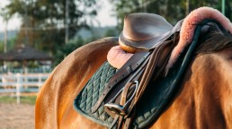Marketplace d'occasion accessoires cavaliers