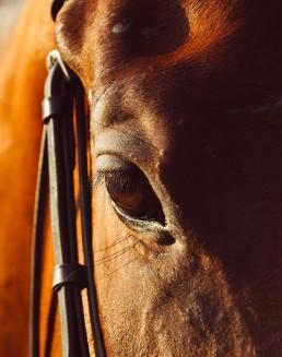 Vide sellerie en ligne pour amateur de cheval